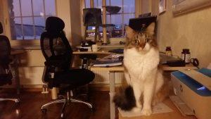 kassi hoid