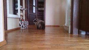 Jäta kass reisi ajaks koju