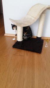 kassi külastamine