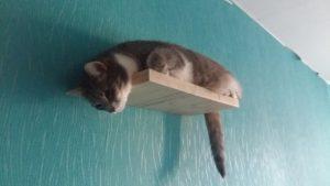 Pildil on näha kassidele paigaldatud üks riiulitest, kus algul käis ainult kiisu Pibi. Hiljem õppis Pets ka riiulile hüppama.